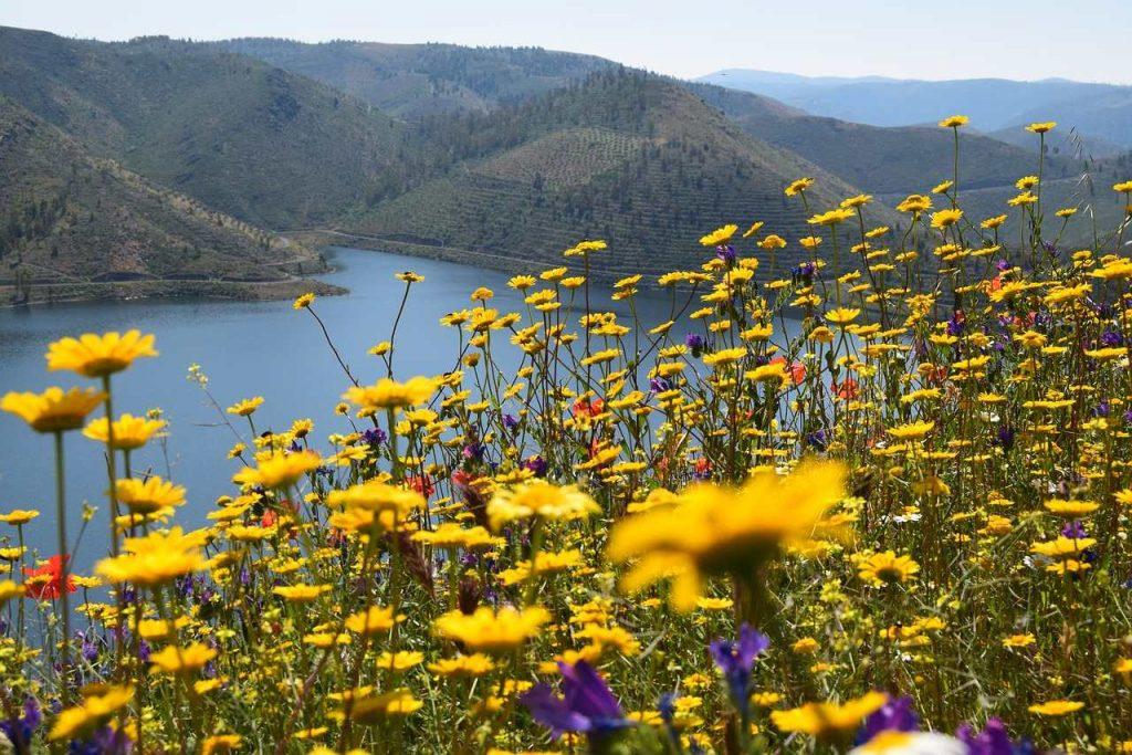 River Douro Cruise landscape