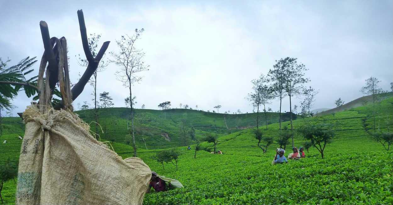 sri-lanka-Holiday tours