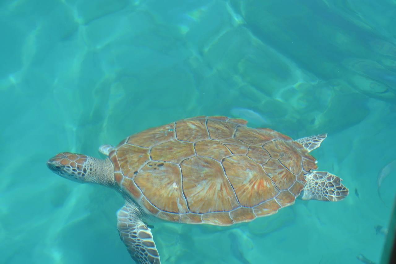 Barbados _holidays