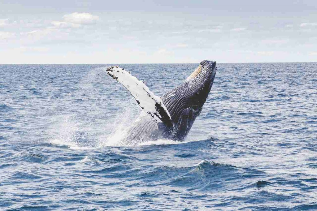 whale watching America