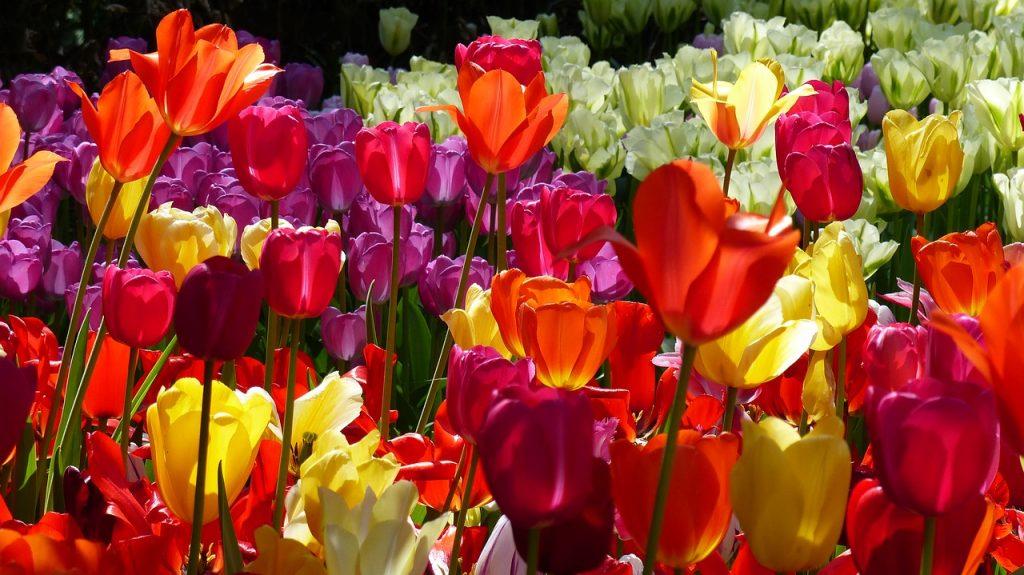 springtime garden theme cruise