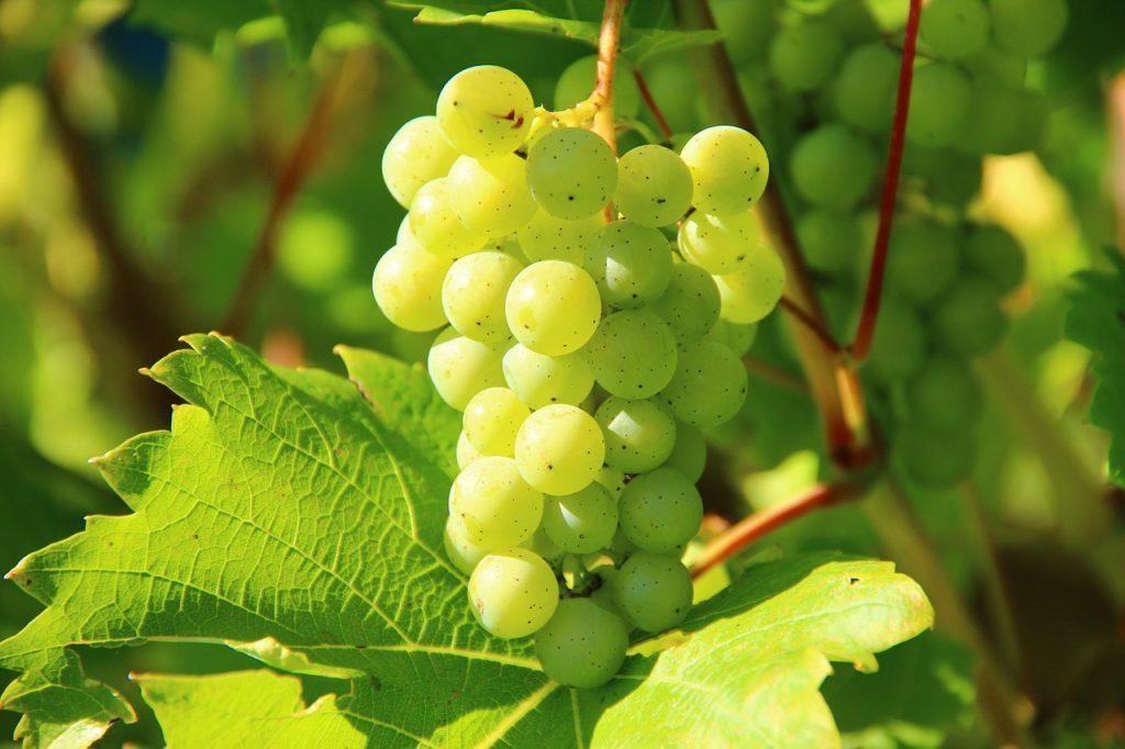 Vineyards Finger Lakes