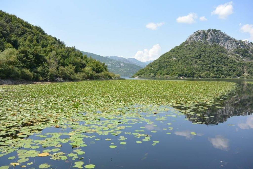 skadar-lake-Montenegro