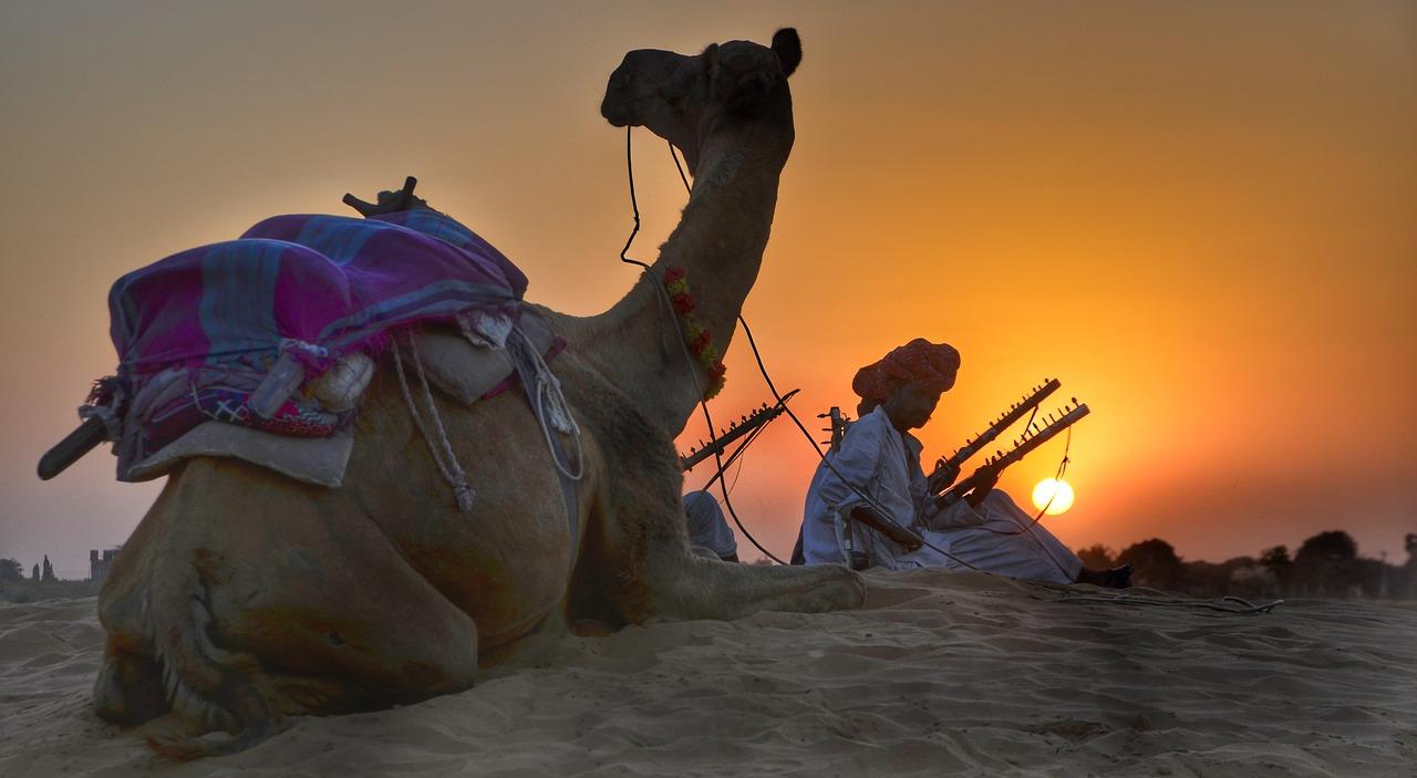 Ras Al Khaimah camels